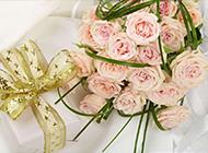 娇媚的粉玫瑰高清图片集锦