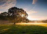 阳光下的树木风景高清图片