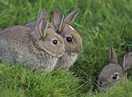萌萌哒兔子图片集锦