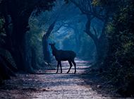 迷路在森林的可爱梅花鹿壁纸