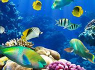 奇妙绚丽的海底世界图片