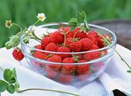 新鲜酸甜的小草莓图片