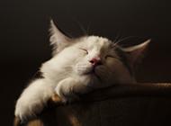 可爱小猫睡觉的图片