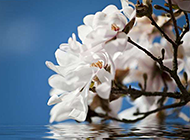 凋零水面的桃花高清大图