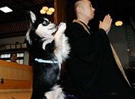 念阿弥陀佛的二货狗狗搞笑图片