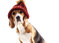 可爱的宠物狗狗写真图片