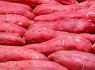 转基因的红薯超清晰图片