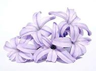 紫色鲜花花束图片素材欣赏