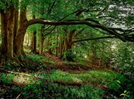 绿色护眼森林风景电脑桌面壁纸