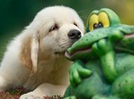 可爱卖萌的狗狗图片欣赏