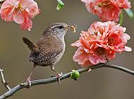 春天的小鸟高清摄影图片