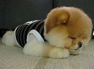 心情不好的狗狗动物图片