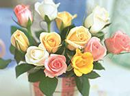 浪漫情人节盆景玫瑰花图片