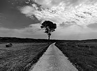 意大利美丽草原风景黑白摄影图片
