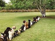排队上厕所的狗狗搞笑图片