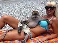 艳福不浅的猴子动物图片