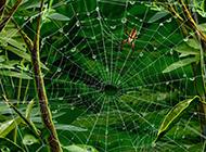 可爱清新的蜘蛛网背景图片