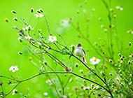绿色大自然小鸟特写壁纸图片