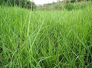 绿色的草地实拍图片
