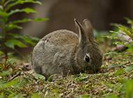灰色的小兔子高清锁屏壁纸