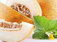 香甜可口的哈密瓜图片赏析