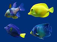 各种各样的鱼图片素材