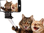 聪明可爱的猫自拍图片