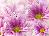 唯美的情人节鲜花图片