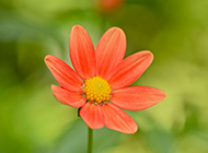 大自然春天小清新花卉壁纸图片