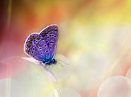 超清的蝴蝶与花朵唯美图片