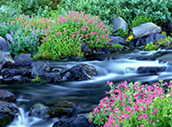 山涧小溪河流树木风景图片