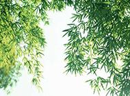 绿色竹子清新ppt背景图片