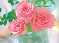 好看唯美的粉玫瑰摆设图片