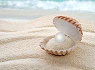 唯美沙滩和珍珠贝壳高清图片
