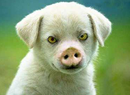 猪狗不如的动物恶搞图片