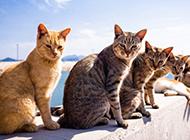 一群超萌可爱的猫图片