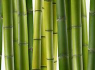 超清晰的竹子图片素材
