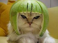 猫咪创意发型搞怪图片