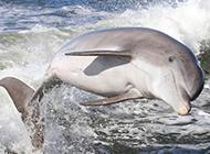 可爱的海豚高清摄影图片