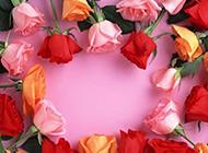 五颜六色的玫瑰花图片素材