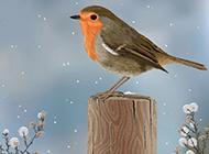 寒冬常见的鸟类高清图片
