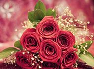 最美的红玫瑰花束图片