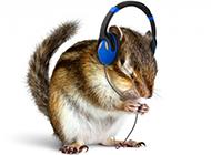 小松鼠动物听音乐的图片