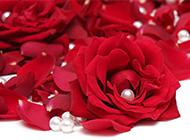 珍珠与玫瑰艺术图片赏析
