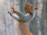 森林欢乐玩耍的可爱小松鼠图片