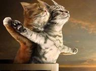 动物版泰坦尼克号恶搞图片