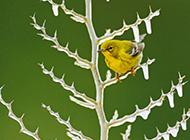 冰枝上的小鸟高清图片
