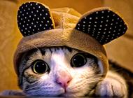 超可爱卖萌的猫高清写真图片