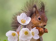 春天森林里的机灵可爱小松鼠壁纸