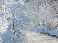 冬天的雪景风光摄影图片